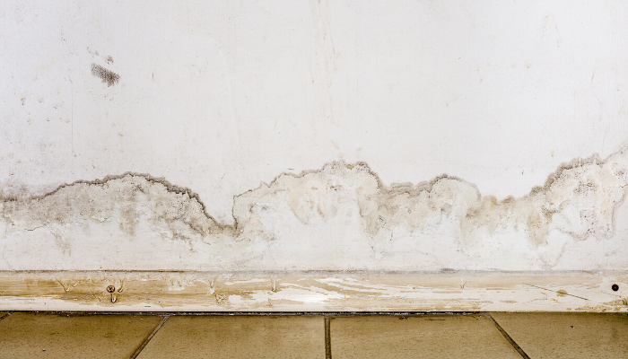 5 Signs You Have Mold in Your Home