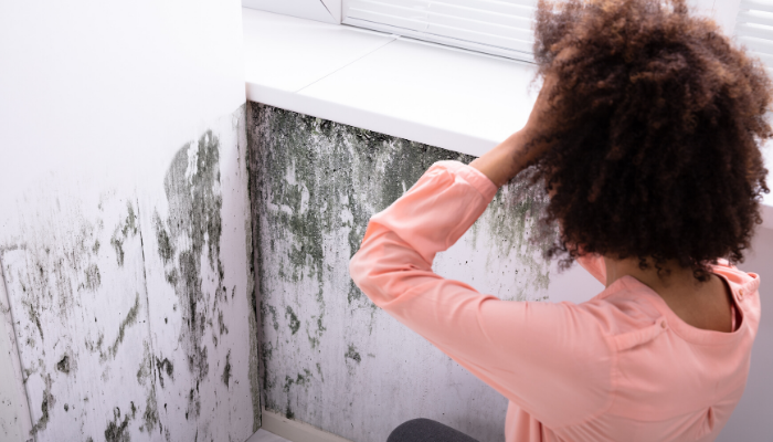 5 Reasons to Hire a Professional When Deal with Mold