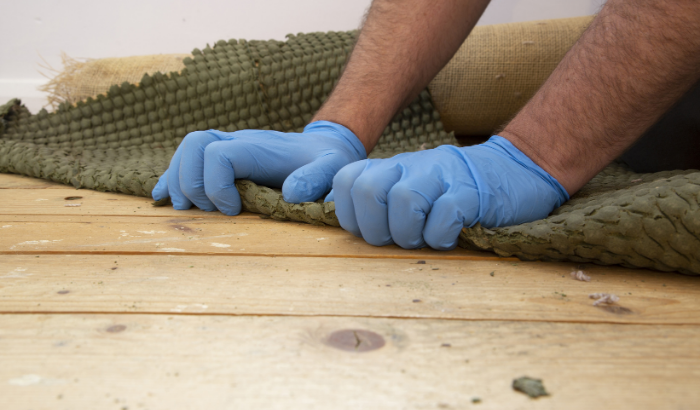 Mold in Your Carpet: How To Proceed